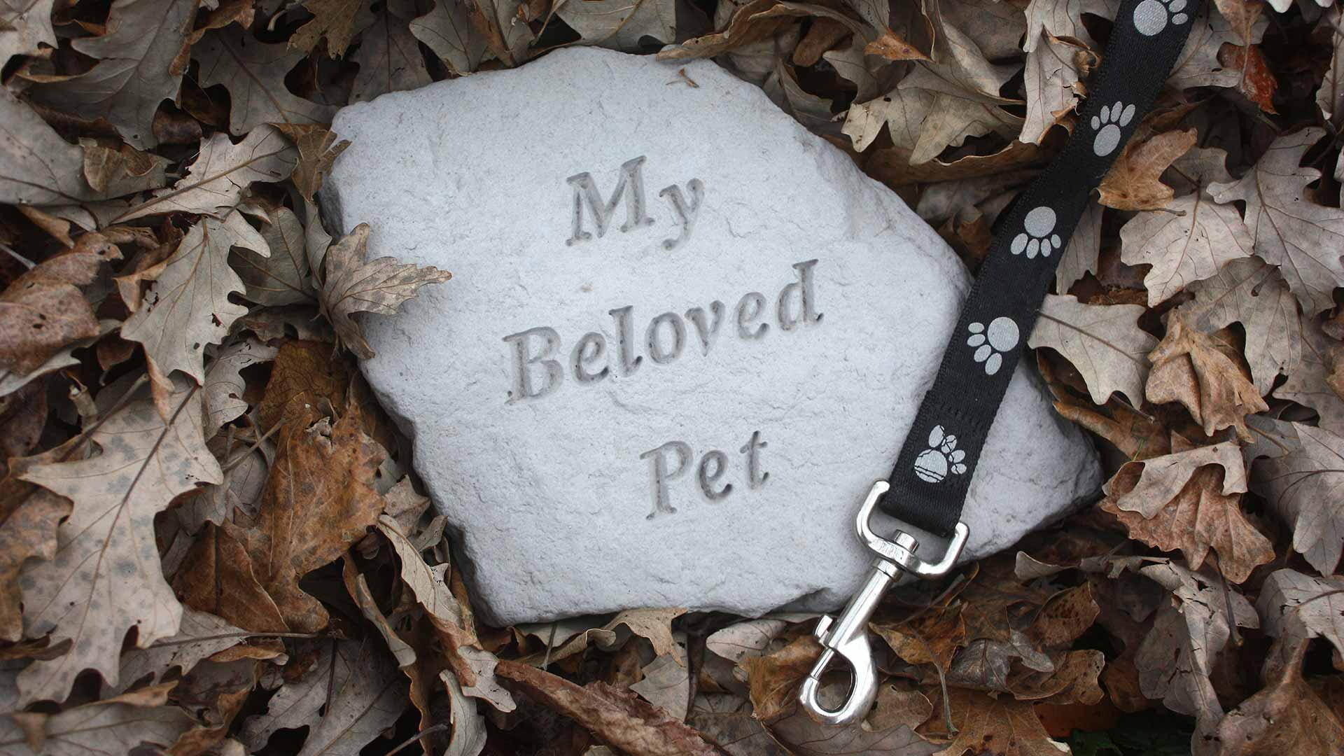Ophaaldienst overleden huisdieren - Hygi Masters