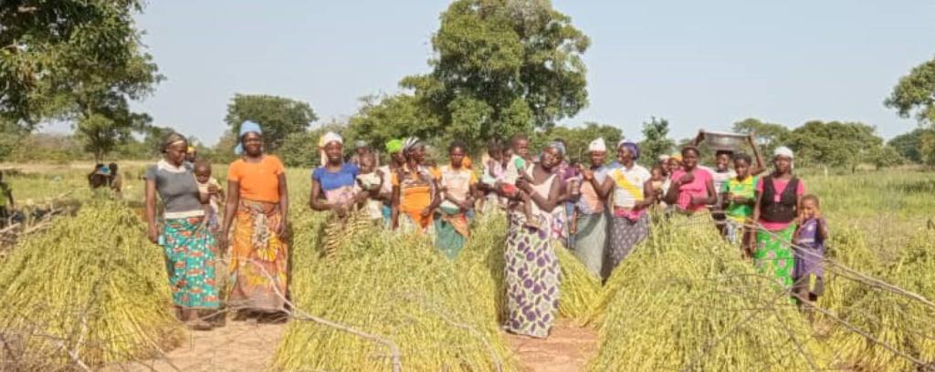 De vrouwen van Kouakoualé werken op het veld.