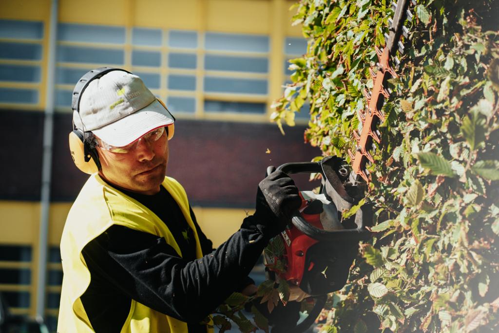 Snoeien (élagage - pruning) is een belangrijke taak om in je tuin uit te voeren in de lente