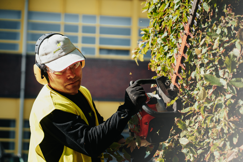 Pruning your hedges in spring gives your gardin more greenery in summer.
